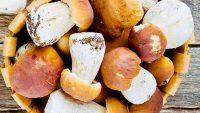 Funghi Porcini - Ristorante Stella d'Italia di Gambara